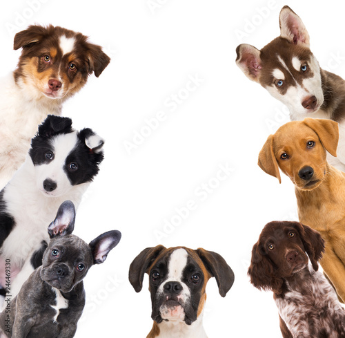 Photo Some puppies isolated on white background
