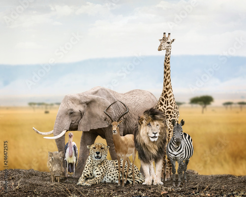 Group of Safari Animal Friends