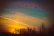 farbenprächtiger Sonnenaufgang mit fliegenden Kranichen
