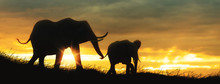 Mother And Baby Elephant African Sunset Silhouette
