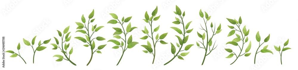 Fototapeta Vector designer elements set collection green branch with leaves. Decorative beauty elegant illustration for design leaf in watercolor style. - obraz na płótnie