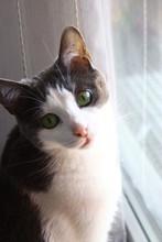 Petit Chat Aux Yeux Verts Regardant Par La Fenetre