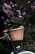 Bicycle Leaning Again Blossomi...