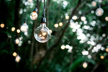 Lighting Decor Into The Forest Jungle