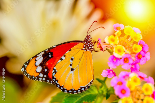 Poster Butterfly Closeup beautiful butterfly sitting on flower