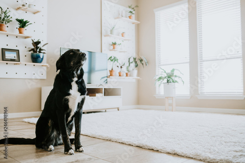 Photo  Happy dog in living room of modern home