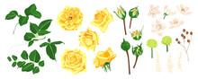 Floral Wedding Set. Vector Ros...