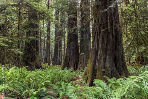 Cathedral Grove, Pacific Rim National Park, Vancouver Island