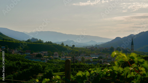 Aluminium Prints Tuscany Green Prosecco vineyards - Conegliano Valdobbiadene