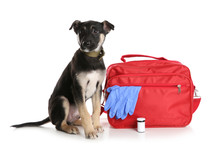 Cute Puppy With First Aid Kit On White Background