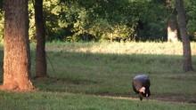 Two Wild Tom Turkeys Grazing