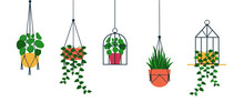 Standing And Hanging Terrarium With Potted Plants. Bundle Of Trendy Macrame Hangers For Plants Growing In Pots (pilea,string Of Pearls,planthanger) Cartoon Flat Vector Illustration Isolated From White