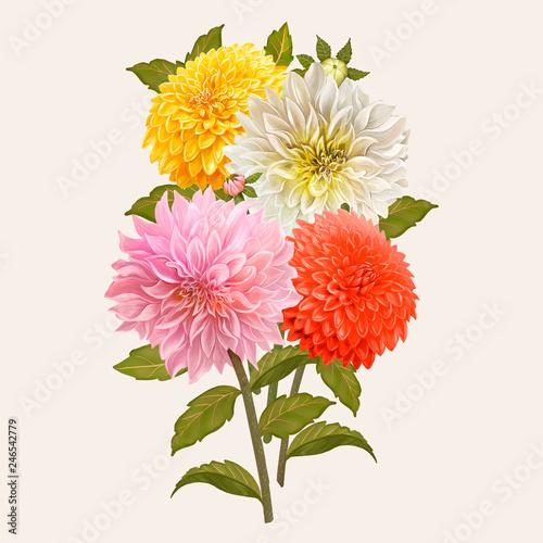 Fényképezés Mixed Dahlia flowers illustration