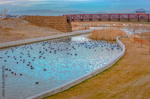 Photo Bridge over lake with ducks in Daybreak Utah