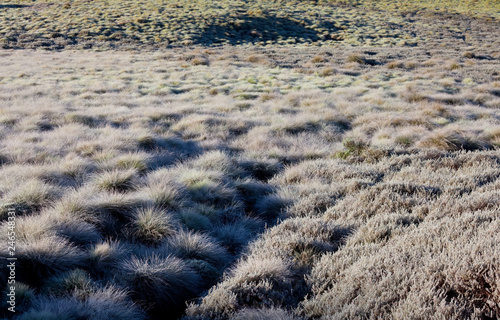 Frozen meadow