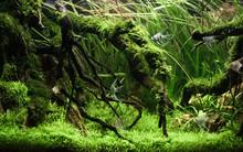 Beautiful Tropical Aqua Scape, Nature Aquarium Green Plant And Tropical Colorful Fish In Aquarium Fish Tank.