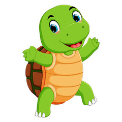 A cute turtle character cartoon