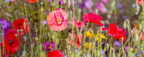Fototapety, obrazy: summer meadow