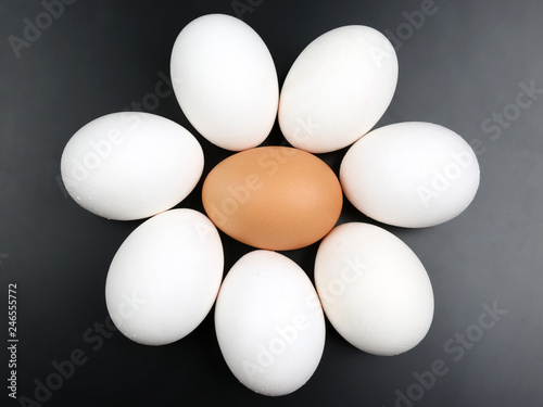 chicken eggs on dark background