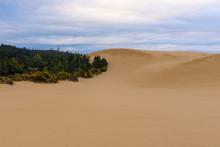 Oregon Dunes National Recreati...
