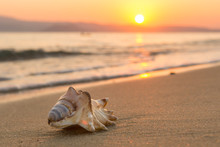 Sea Shell On The Beach At Sunset
