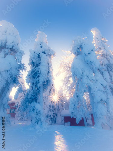 Foto auf Gartenposter Blau Jeans Heavy snow landscape. Photo from Sotkamo, Finland.