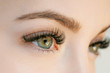 canvas print picture - Close up view of beautiful green female eye with long eyelashes, smooth healthy skin. Eyelash extension procedure. Perfect trendy eyebrows. Good vision, contact lenses. Eye health and care.