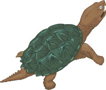 Snapping Turtle Vector Illustr...