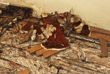 Fruiting Body Of Dry Rot On The Floor