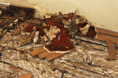 fruiting body of dry rot on the floor Tablou Canvas