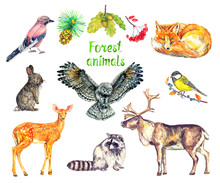 Forest Animals Set, Eurasian J...