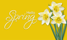 Spring Card Narcissus Flowers ...