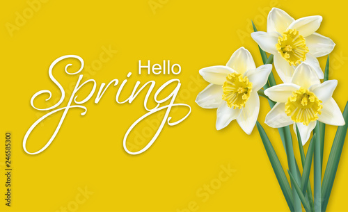 Fototapeta Spring card narcissus flowers bouquet on yellow background Vector realistics
