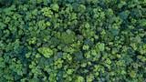 Fototapeta Las - Forest and tree landscape texture background, Aerial top view forest, Texture of forest view from above.