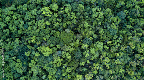 Forest and tree landscape texture abstract background, Aerial top view forest atmosphere area, Texture of forest view from above, Ecosystem and healthy ecology environment concepts.