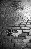 Urban puddle in cobblestone street