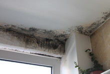 Mold In House Edges Dangerous ...