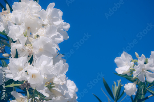 Fotografía  Flores blancas en la cima de una planta