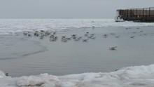 Seagulls Sitting On Ice-covered Sea