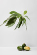 selective focus of avocados under green plant on grey background