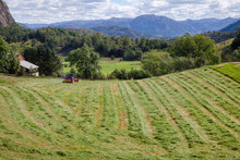 Summer Rural Landscape With Tractor Making Windrows Of Freshly Cut Hay A Field In Norway Scandinavia