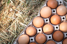 Chicken Eggs Are Fresh From Ch...