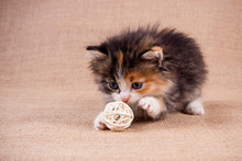 Kitten Plays With A Ball On A Woven Background. Warm Colors