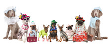 Group Of Dogs Dressed In Clothes