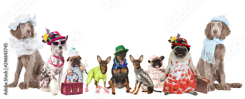 Fényképezés Group of dogs dressed in clothes