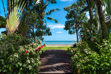 The Path Through The Tropical ...