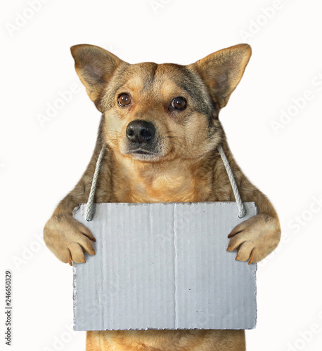 Photo  Dog with a blank sign 2