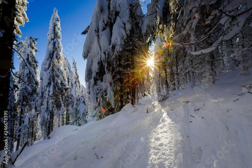 Foto auf AluDibond Grau Verkehrs Winter trekking Beskidy mountains Rysianka