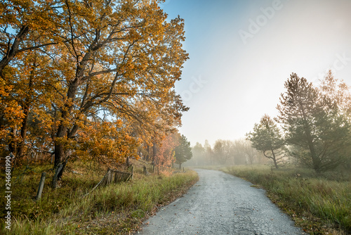 Foto op Aluminium Oranje old asphalt road passes through the fabulous autumn forest in the fog at dawn