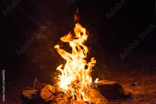 Bonfire near water in forest